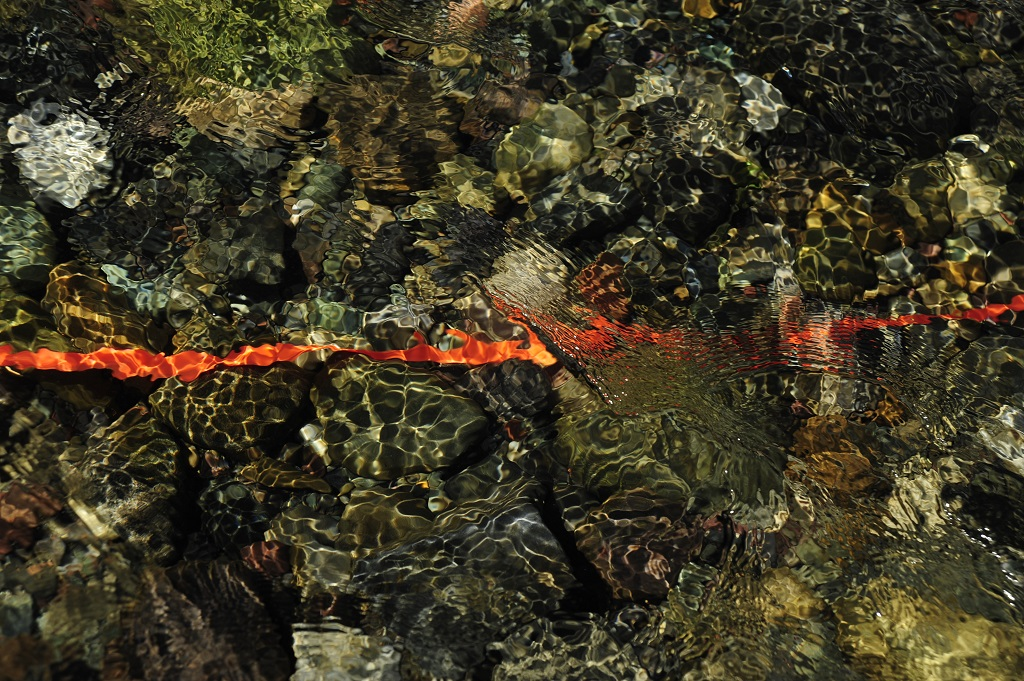 BARBARA AMOS Line of Clarity, Photograph, 2016, Image 22 x 30 inches, 56 x 76 cm